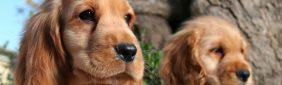 Web sobre perros – Huellitas al Corazón