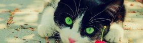 Web sobre Gatos – Mishuuu